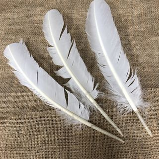 Large Feathers, White 3pc